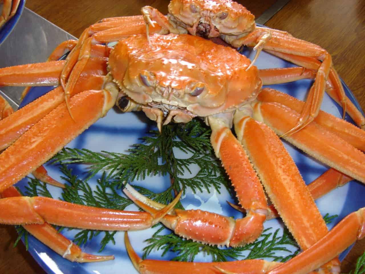 อาหารจังหวัดทตโตริ Tottori ปูมัตสึบะ (Matsubagani : 松葉がに)