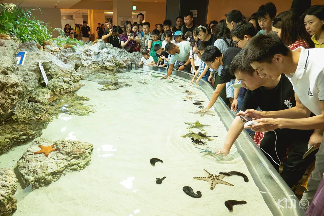 พิพิธภัณฑ์สัตว์น้ำชูราอุมิ