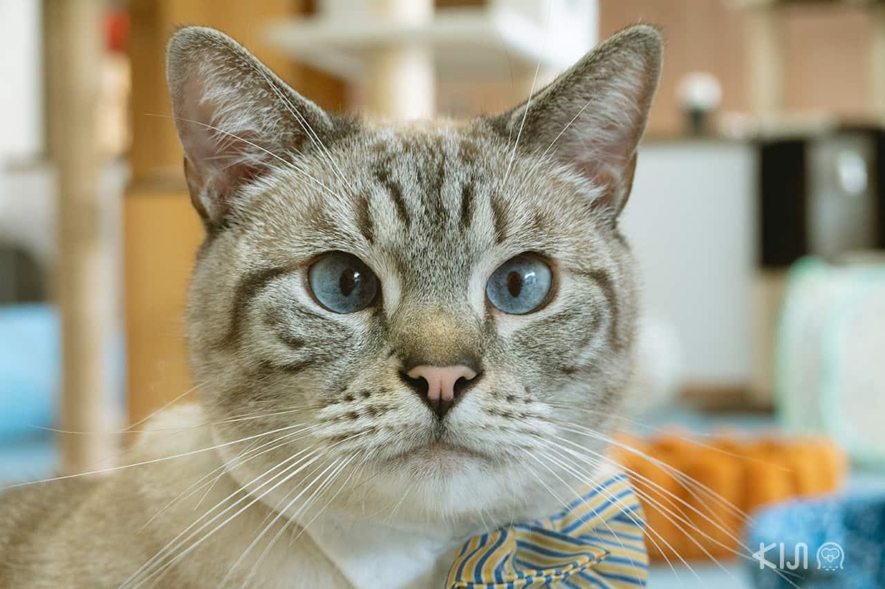 คาเฟ่แมวโอกินาว่า