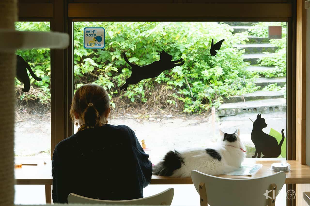 รีวิว Cat Cafe Nyansore โอกินาว่า