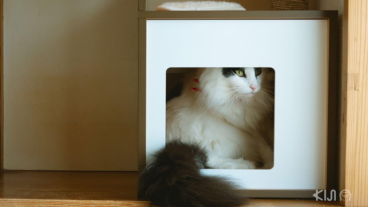รีวิว คาเฟ่ โอกินาว่า Cat Cafe Nyansore