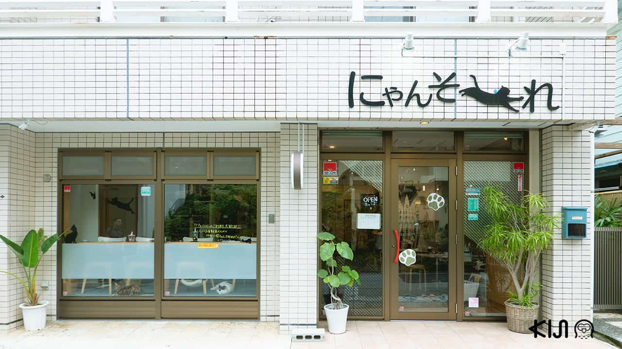 Cat Cafe Nyansore คาเฟ่แมว โอกินาว่า