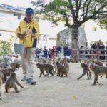 takasakiyama monkey park-beppu city-kyushu region-japan
