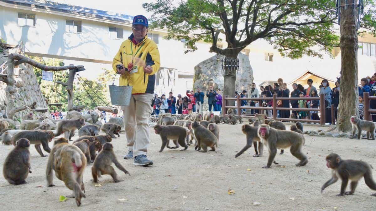 Takasakiyama Monkey Park