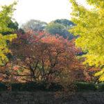 wakayama city-spring-kansai region-japan