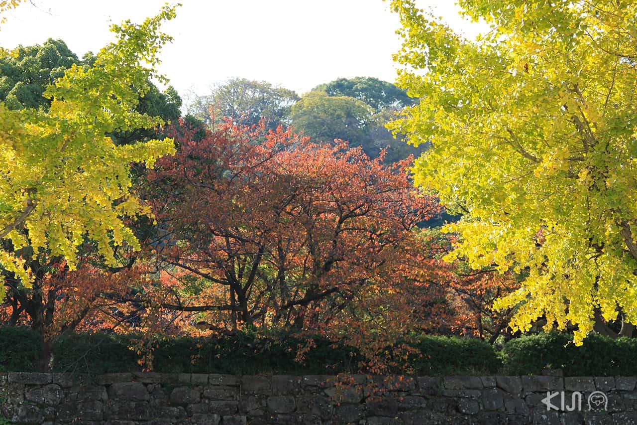 Wakayama Castle in Autumn