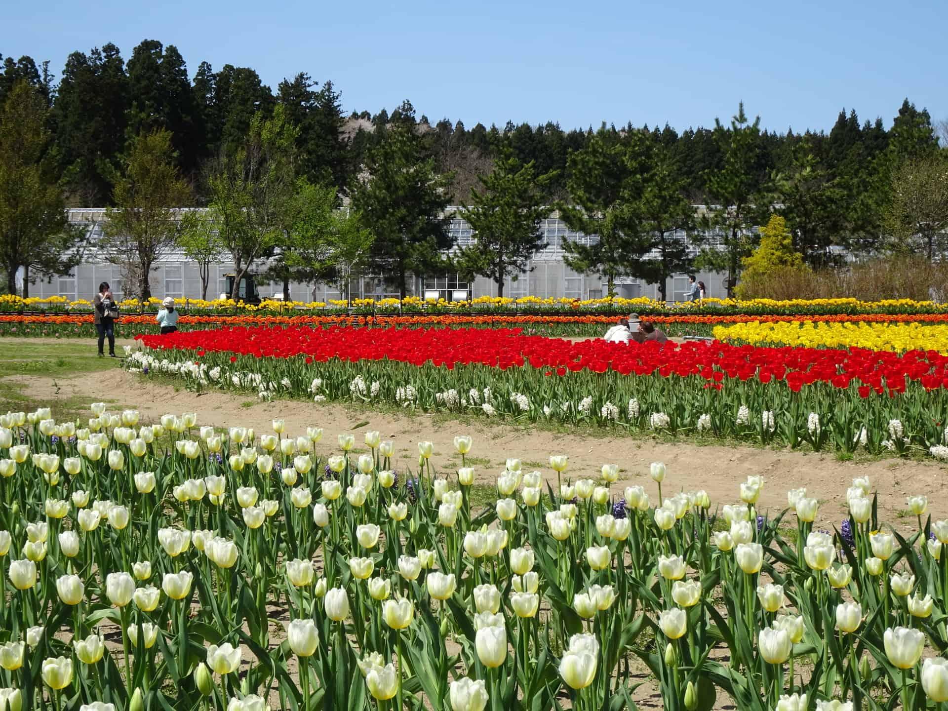 เที่ยว อาคิตะ (Akita) ที่ สวนดอกไม้บลูเมซเซอาคิตะ (Blue Messe Akita)
