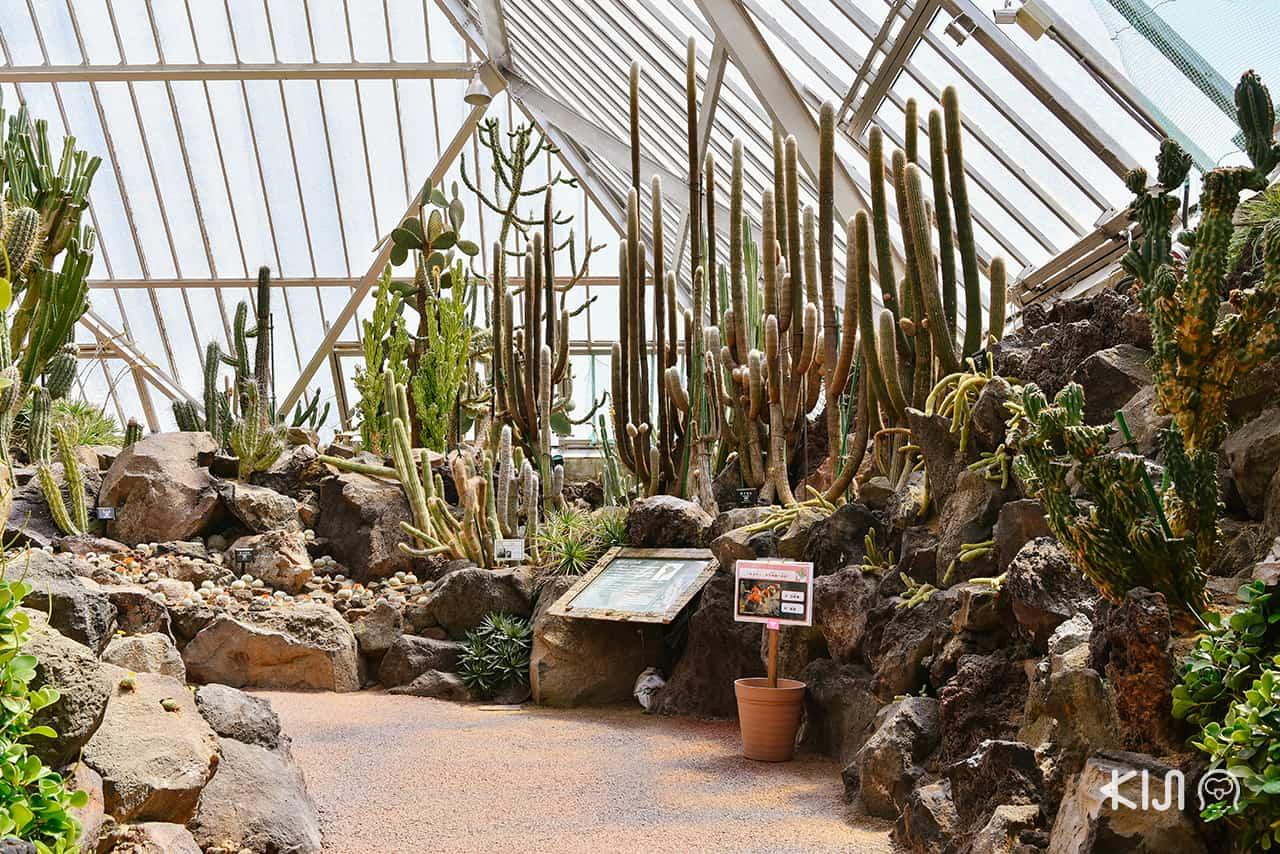 Izu Shaboten Zoo มีการจัดแสดงต้นกระบองเพชรกว่า 1500 สายพันธุ์