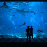 aquarium_194059064