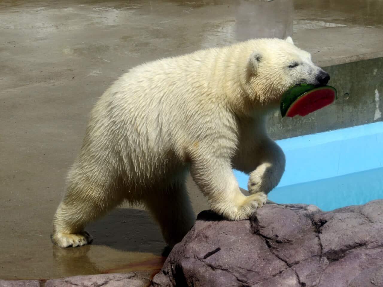 เที่ยว พิพิธภัณฑ์สัตว์น้ำโองะ (Oga Aquarium GAO)
