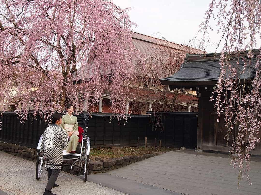 จุดชม ซากุระ โทโฮคุ - หมู่บ้านซามูไรคาคุโนะดาเตะ