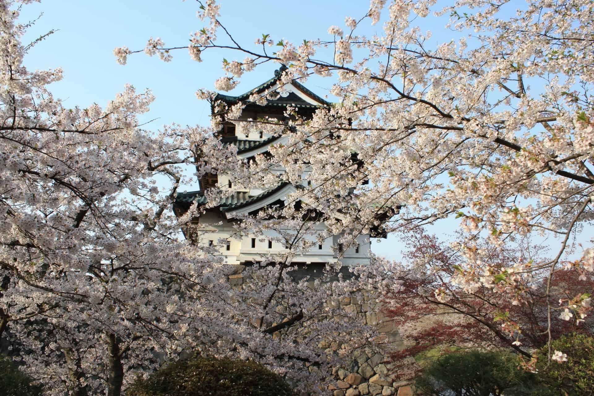 จุดชม ซากุระ โทโฮคุ - สวนปราสาทฮิโรซากิ (Hirosaki Castle Park)