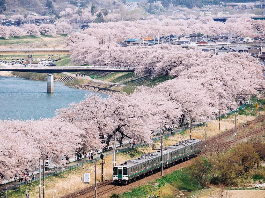 จุดชม ซากุระ ใน โทโฮคุ JR East Pass Tohoku Area - สวนปราสาทเก่าฟุนะโอกะ