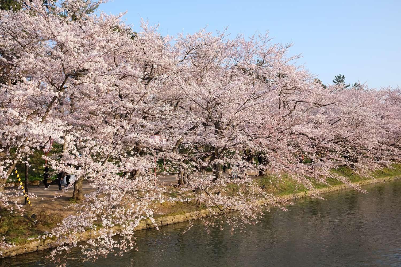 ที่เที่ยวชม ซากุระ โทโฮคุ JR East Pass Tohoku Area - สวนปราสาทฮิโรซากิ