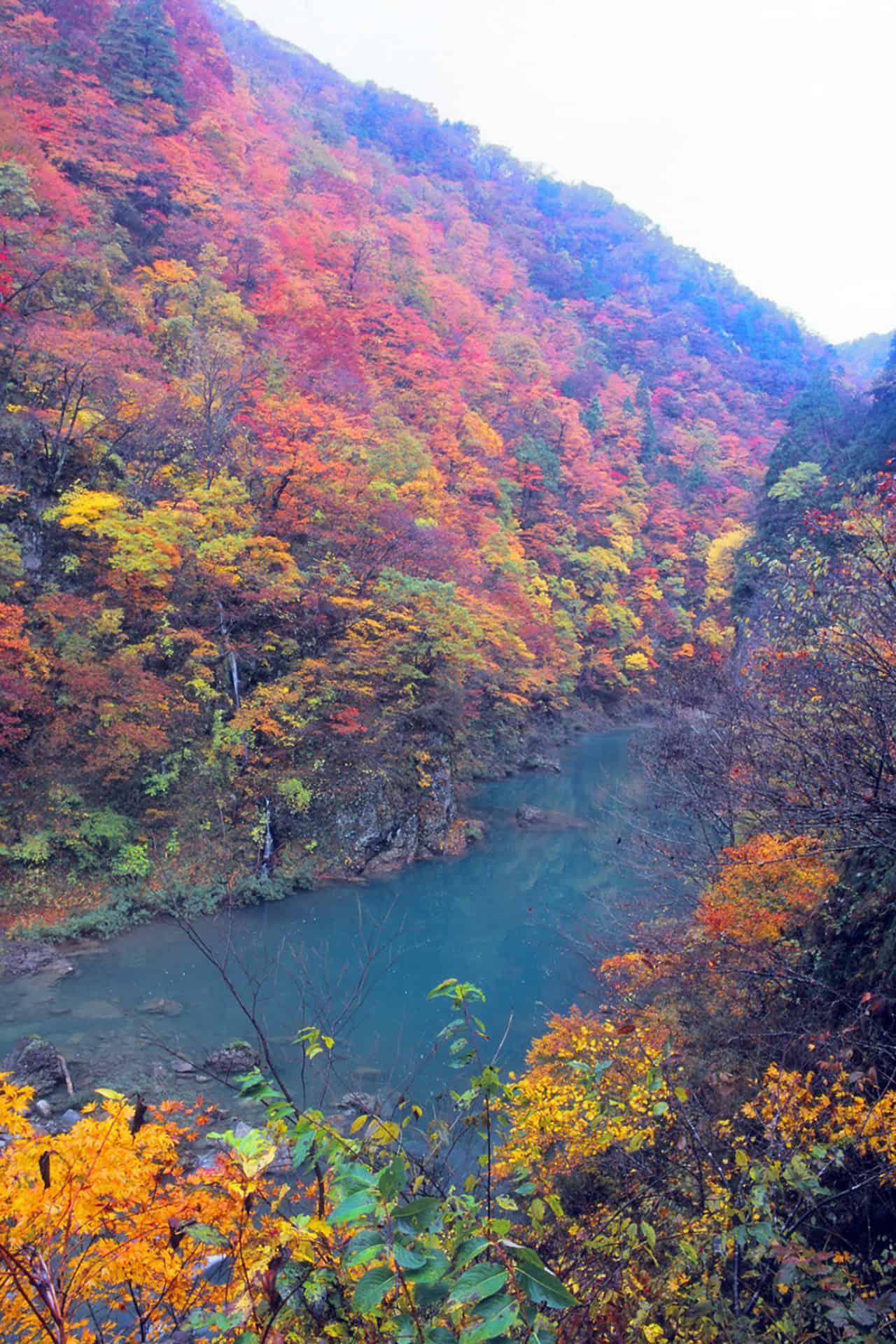 Dakigaeri Gorge หุบเขาดาคิกาเอริ Autumn