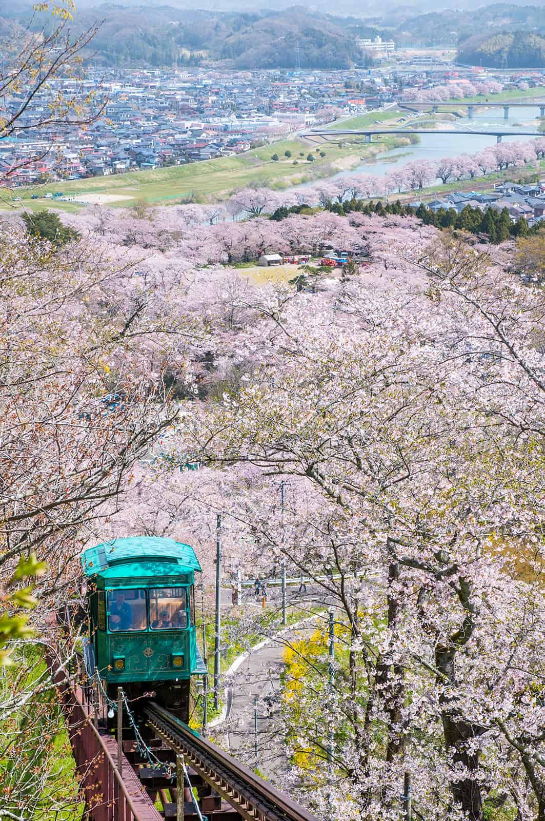 จุดชม ซากุระ ใน โทโฮคุ - สวนปราสาทเก่าฟุนะโอกะ (Funaoka Joshi Park)