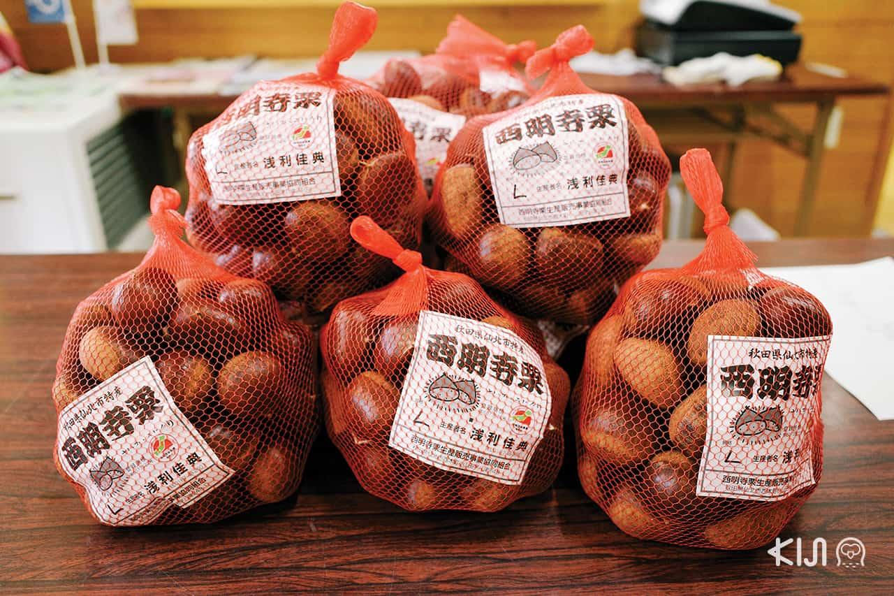 เกาลัดพันธุ์ Saimyoji มีขายที่ Katakuri Center
