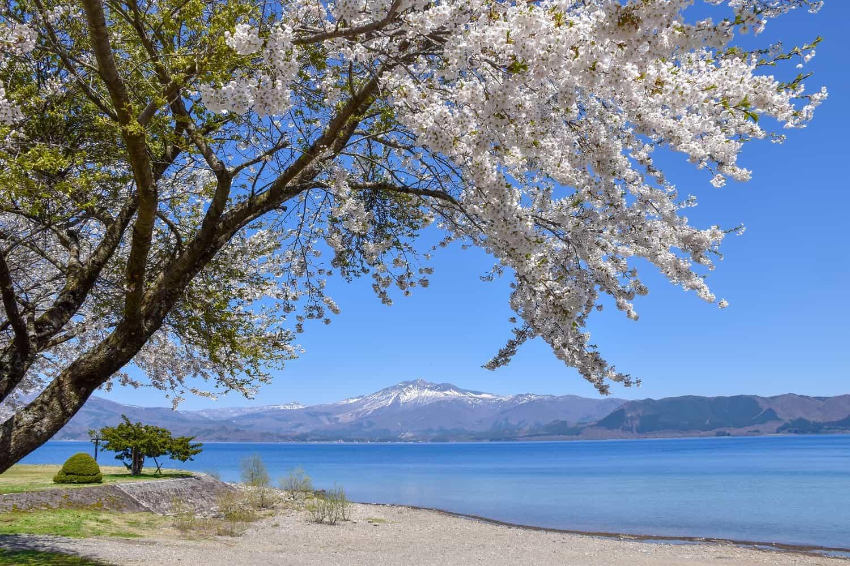 จุดช ซากุระ โทโฮคุ JR East Pass Tohoku Area - ทะเลสาบทาซาวะ (Lake Tazawa)
