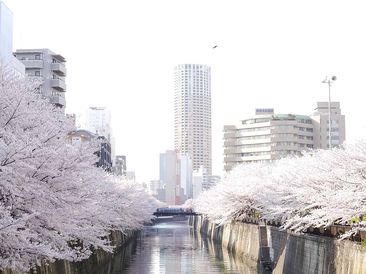 สถานที่ ขอแต่งงาน ญี่ปุ่น - แม่น้ำเมกุโระ
