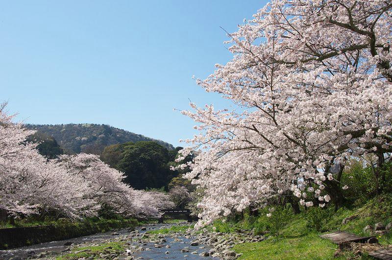 คาบสมุทรอิซุ (Izu Peninsula) ชิซูโอกะ