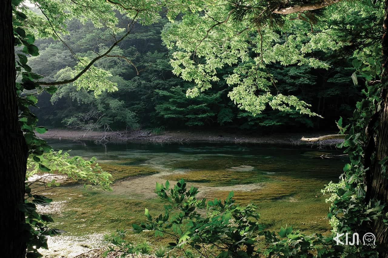 Oirase Gorge จ.อาโอโมริ (Aomori)