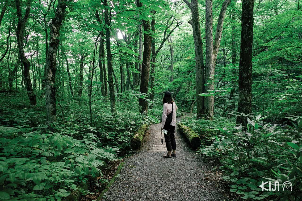 เดินเที่ยว Oirase Gorge จ.อาโอโมริ (Aomori)