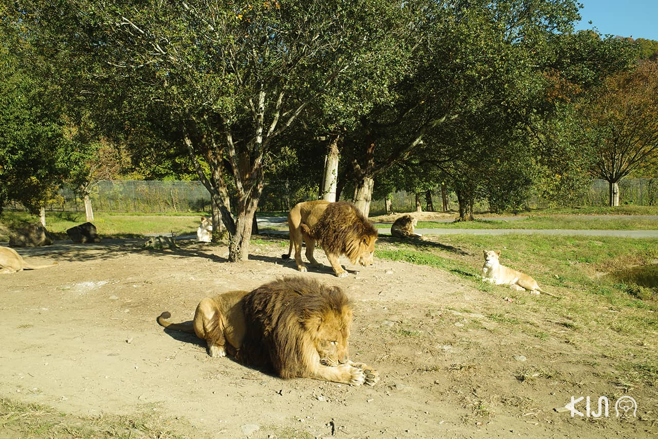 ที่เที่ยวฮิเมจิ Himeji central Safari Park