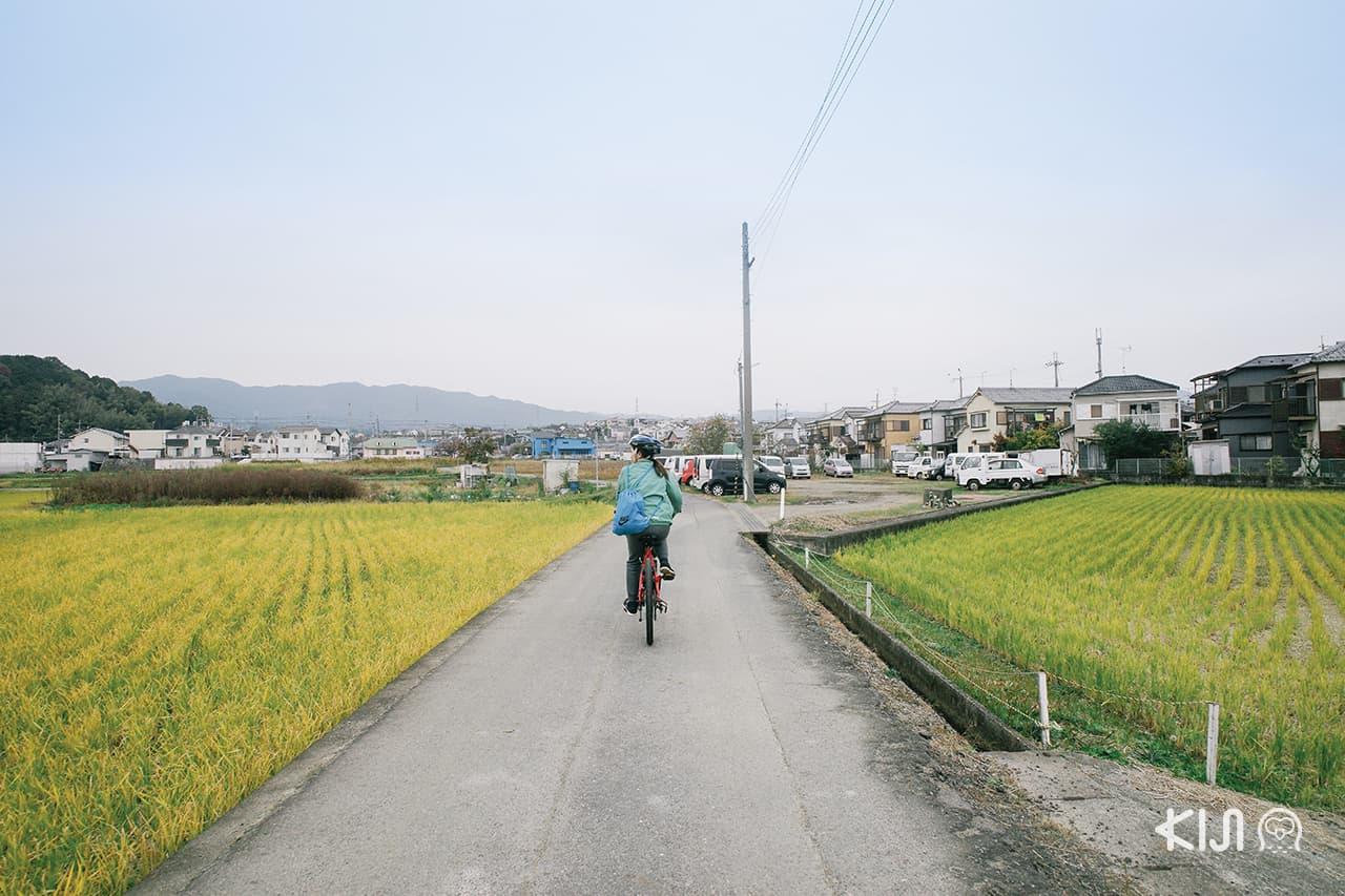 เที่ยว โอตสึ (Otsu)โกเบ(Kobe) ฮิเมจิ (Himeji) : ปั่นจักรยานชมวิวทิวทัศน์รอบทะเลสาบบิวะ