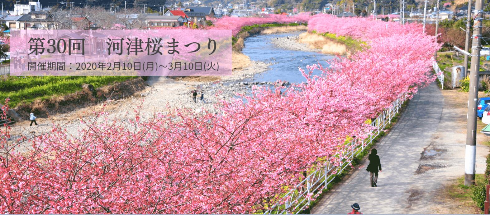 เทศกาลคาวาสึซากุระ ชิซูโอกะ