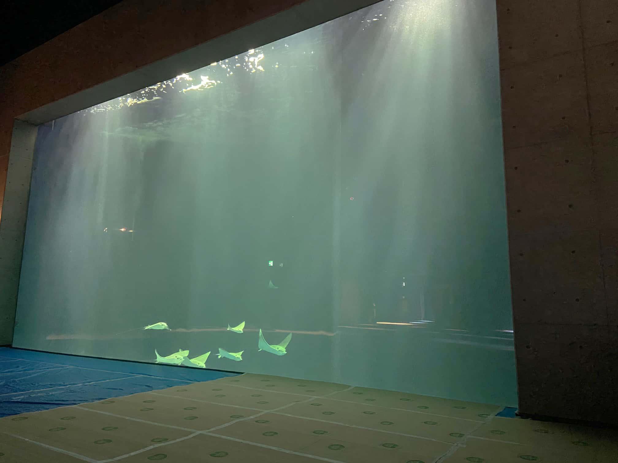 เที่ยวคางาวะ : พิพิธภัณฑ์สัตว์น้ำชิโกกุ (Shikoku Aquarium)