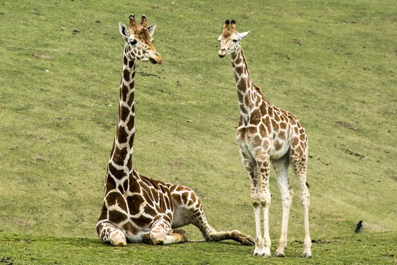 เที่ยว โออิตะ (Oita) - สวนสัตว์แอฟริกันซาฟารี (African Safari)