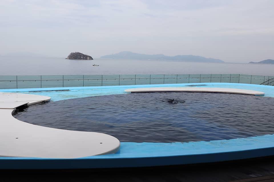 สระโลมา (Iruka Pool) พิพิธภัณฑ์สัตว์น้ำชิโกกุ
