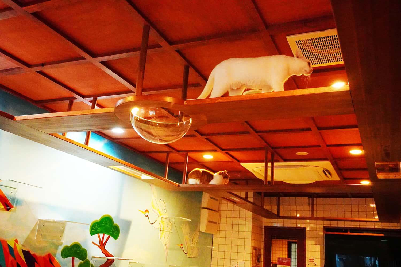 คาเฟ่แมว ใน โอซาก้า