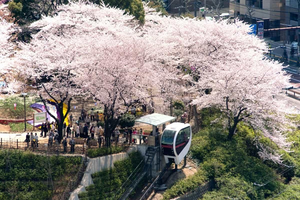รถรางโทเด็งสายอาราคาวะ (Toden Arakawa Line) หรือ รถรางซากุระโตเกียว