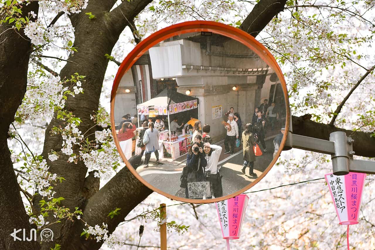 จุดชมซากุระ โตเกียว - นากาเมกุโระ