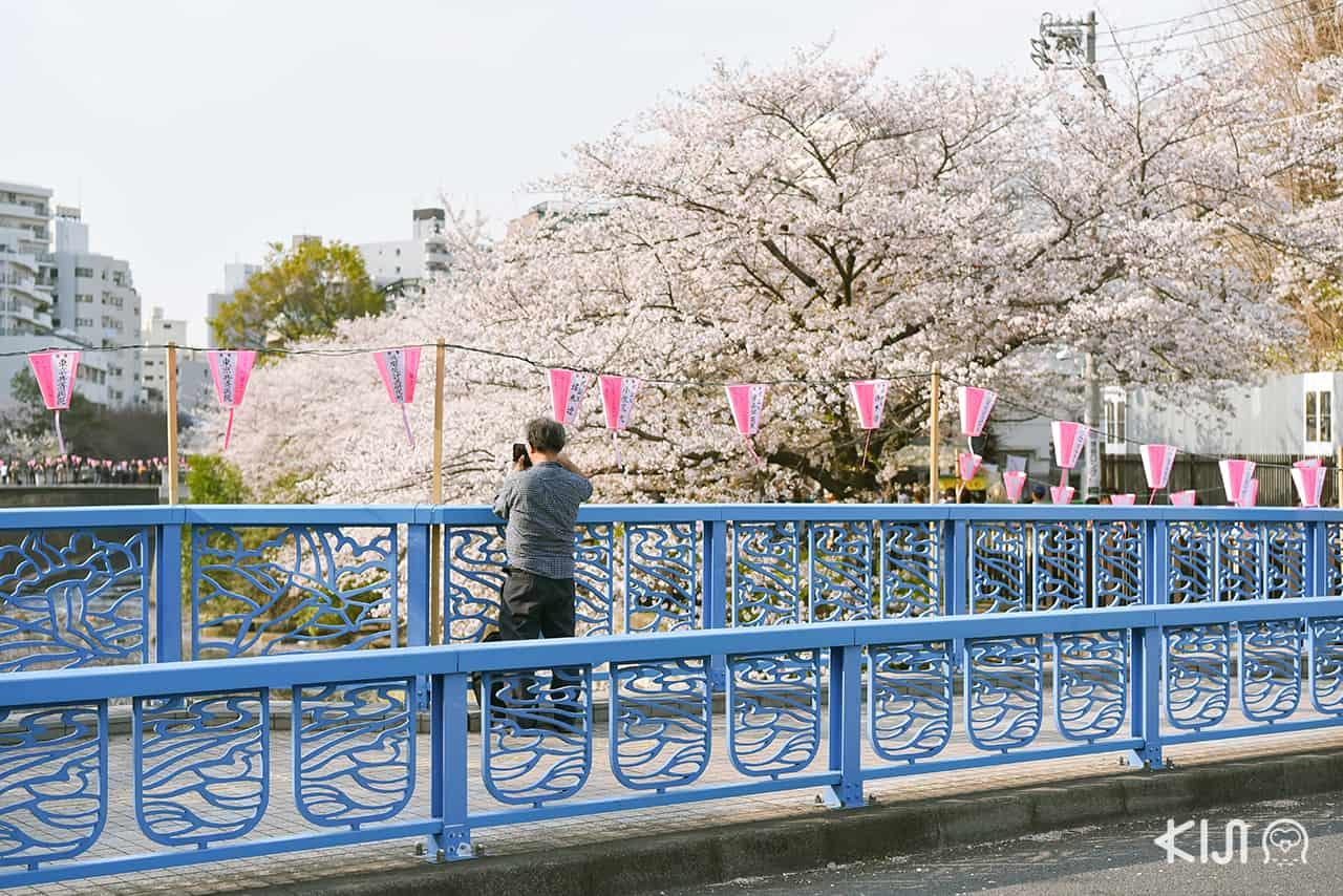 จุดชมซากุระในโตเกียว - นากาเมกุโระ (Nakameguro)