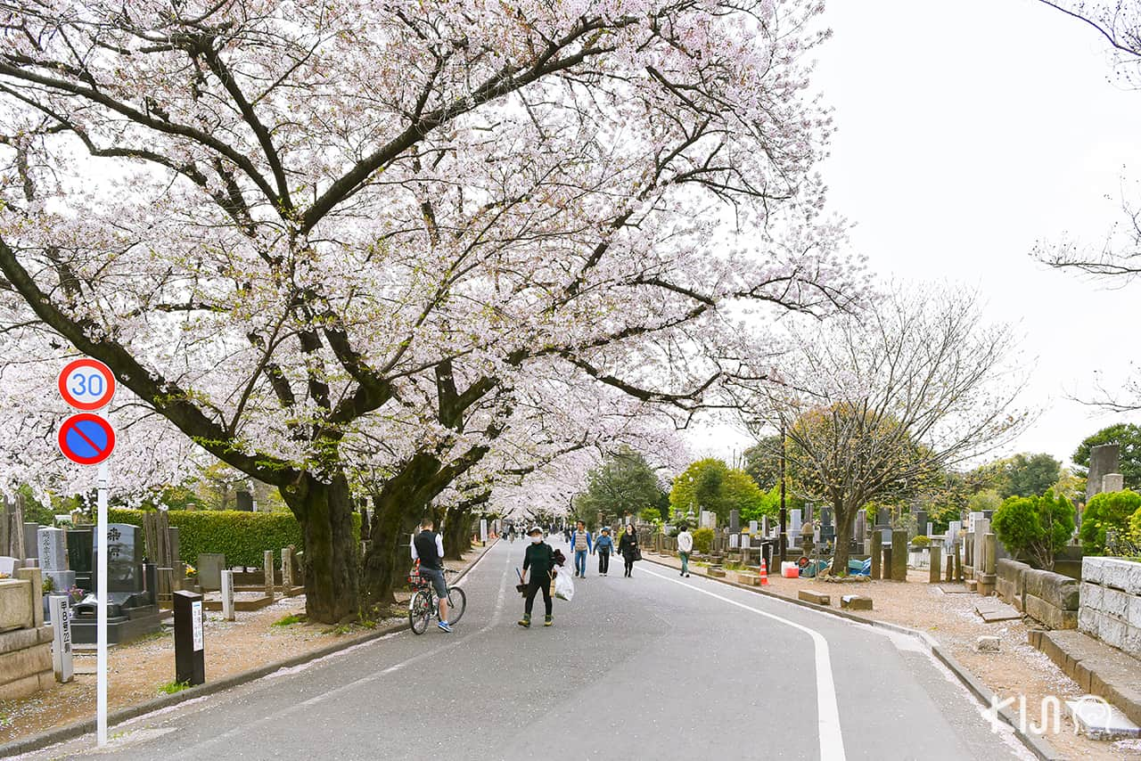 จุดชมซากุระ โตเกียว - วัดเท็นโนจิ (Tennoji Temple)