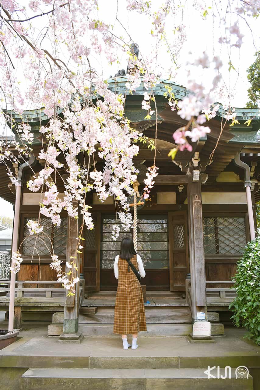 วัดเท็นโนจิ (Tennoji Temple)