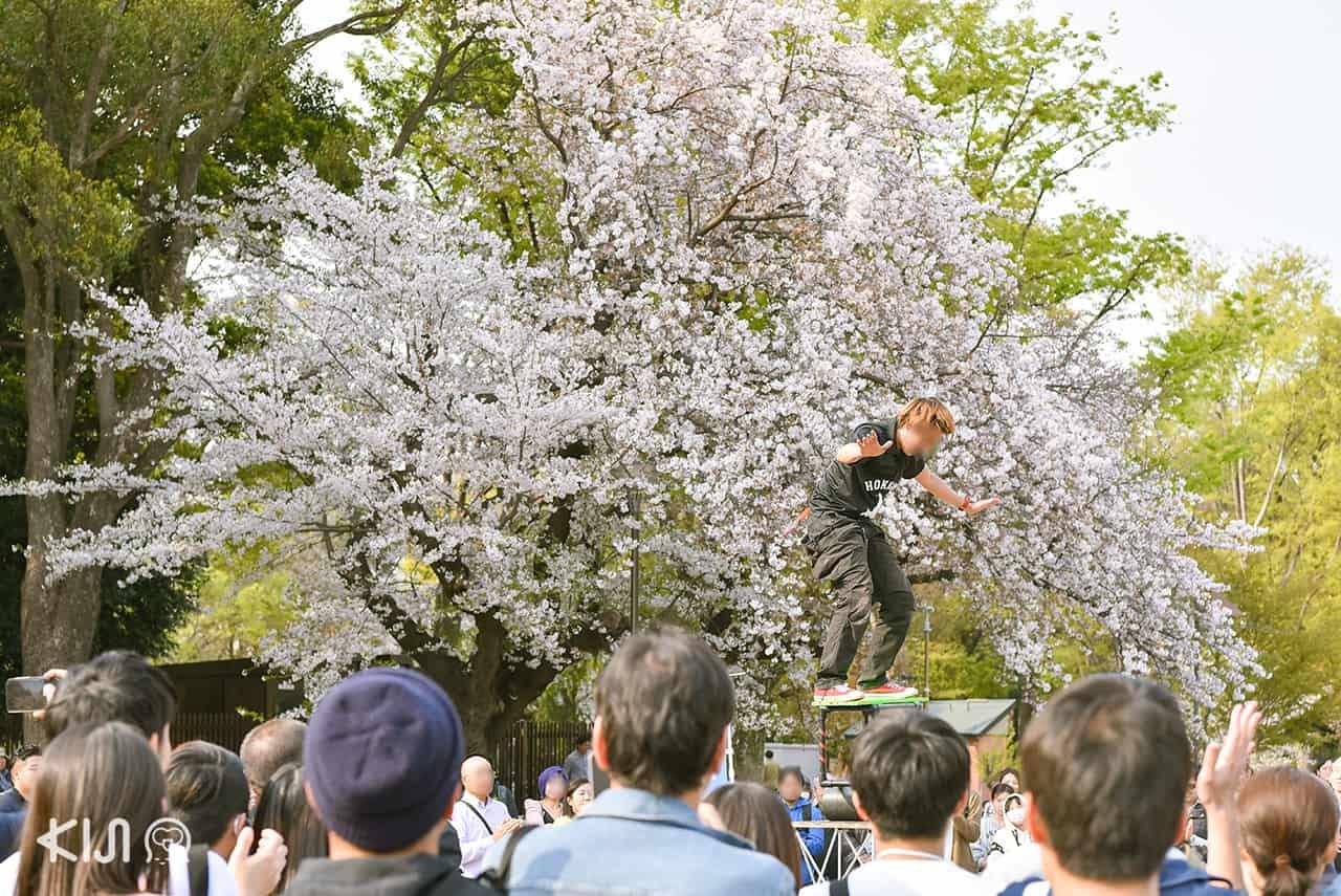 จุดชมซากุระในโตเกียว - สวนอุเอโนะ (Ueno Park)