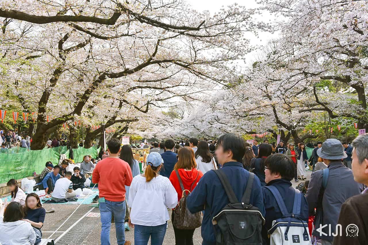 จุดชมซากุระ โตเกียว - สวนอุเอโนะ (Ueno Park)