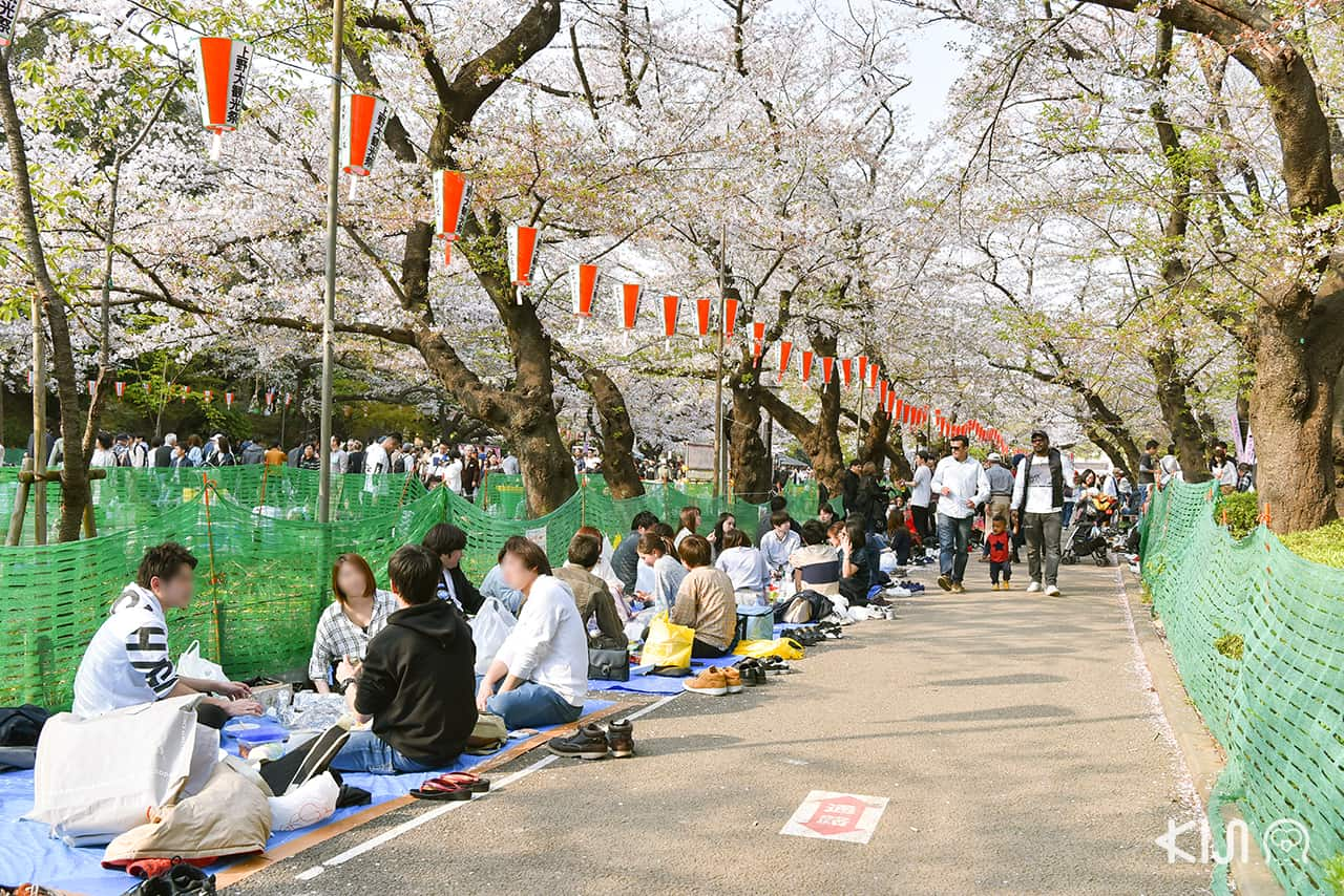จุดชมซากุระ - สวนอุเอโนะ (Ueno Park)
