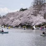 Inokashira Park-2