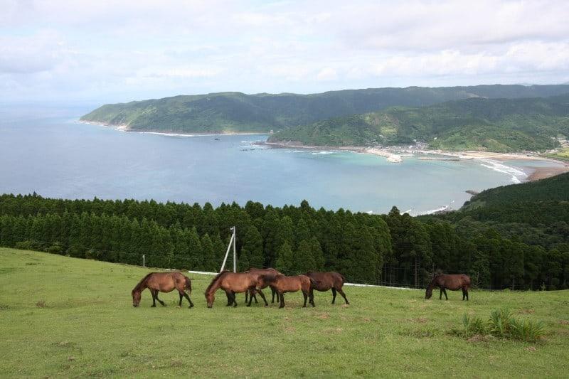 ที่เที่ยว มิยาซากิ : แหลมโทอิ (Cape Toi)