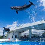 kujukushima-aquarium-morikirara-garden-zoo_0c3e49dcd5efd521d8fb8205987292fdf37c1394 – Copy