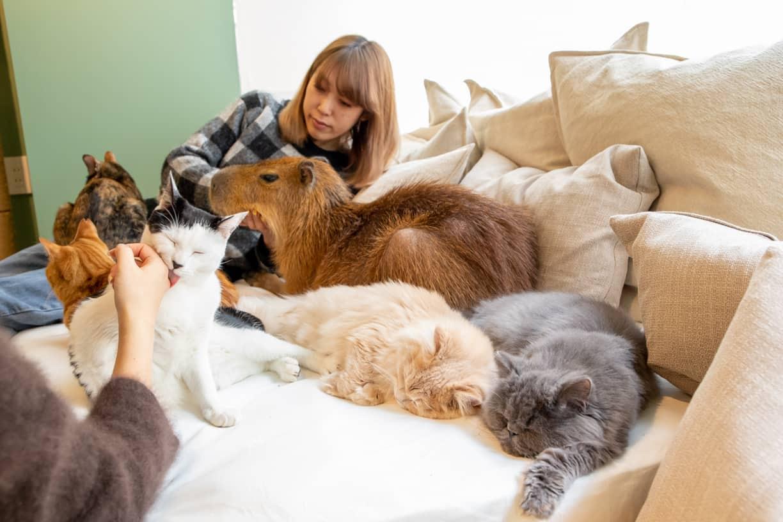 Capy Neko Cafe คาเฟ่แมวและคาปิบาร่า โตเกียว