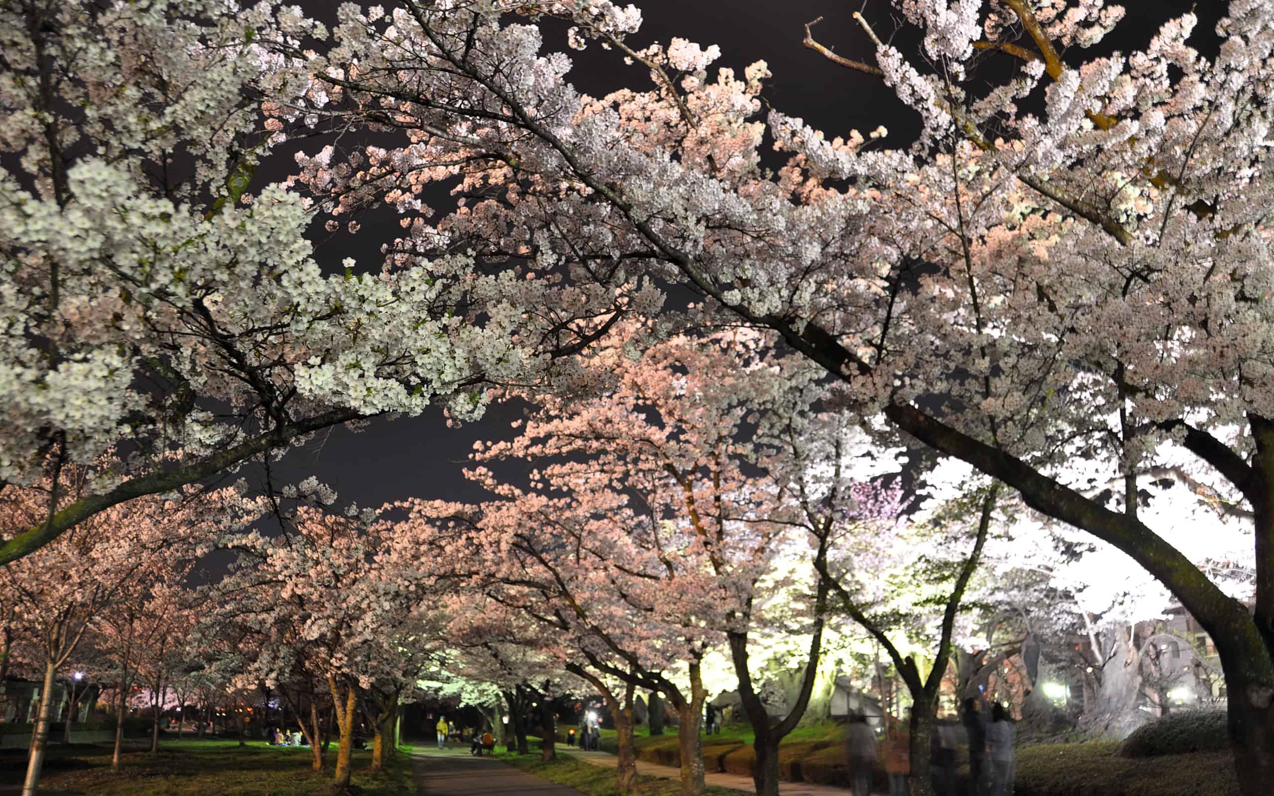 สวนไคเซซัง Kaiseizan Park ไลท์อัพ Light Up