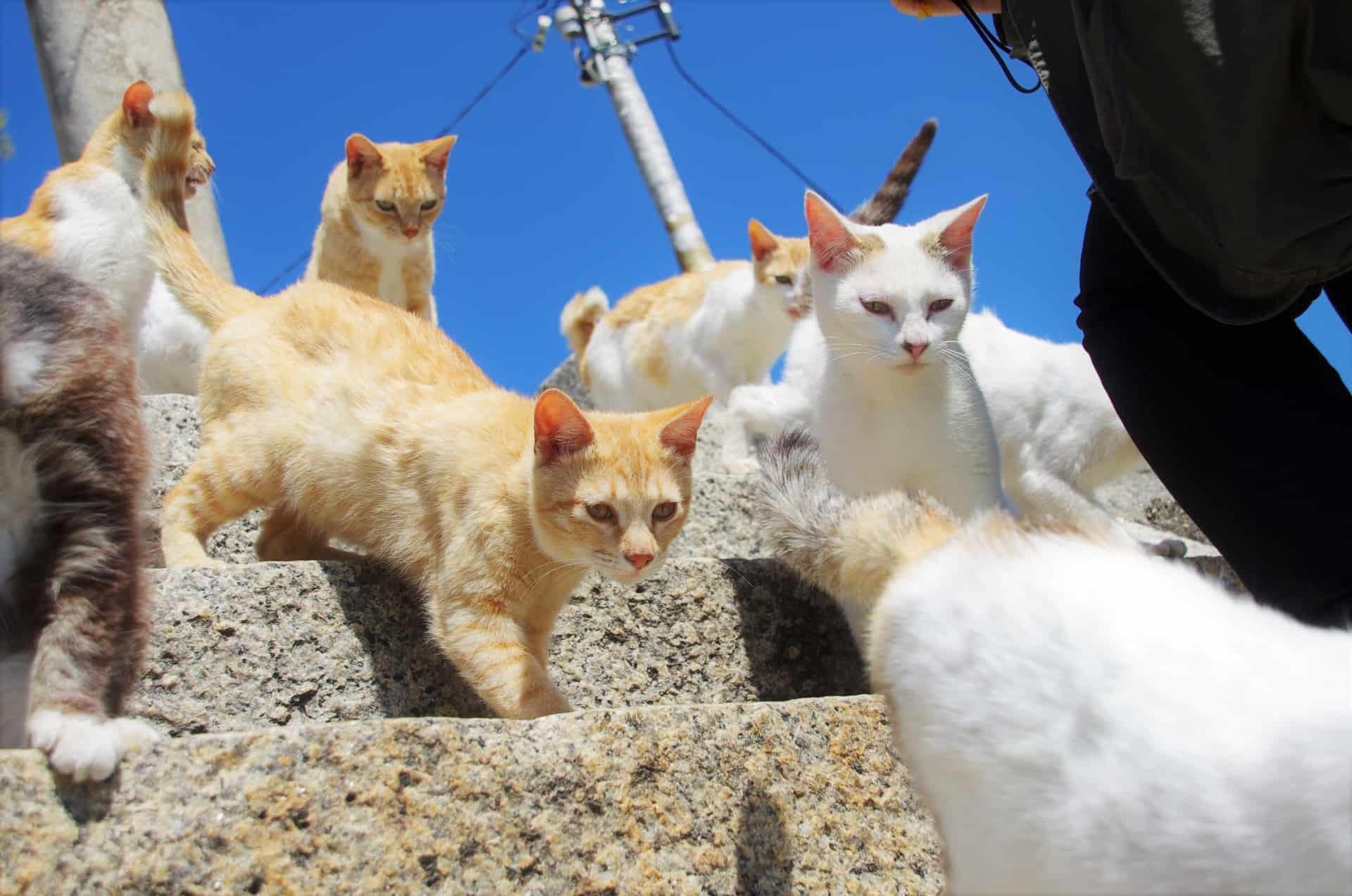สถานที่ส่อง แมว ที่ต้องไปใน ญี่ปุ่น