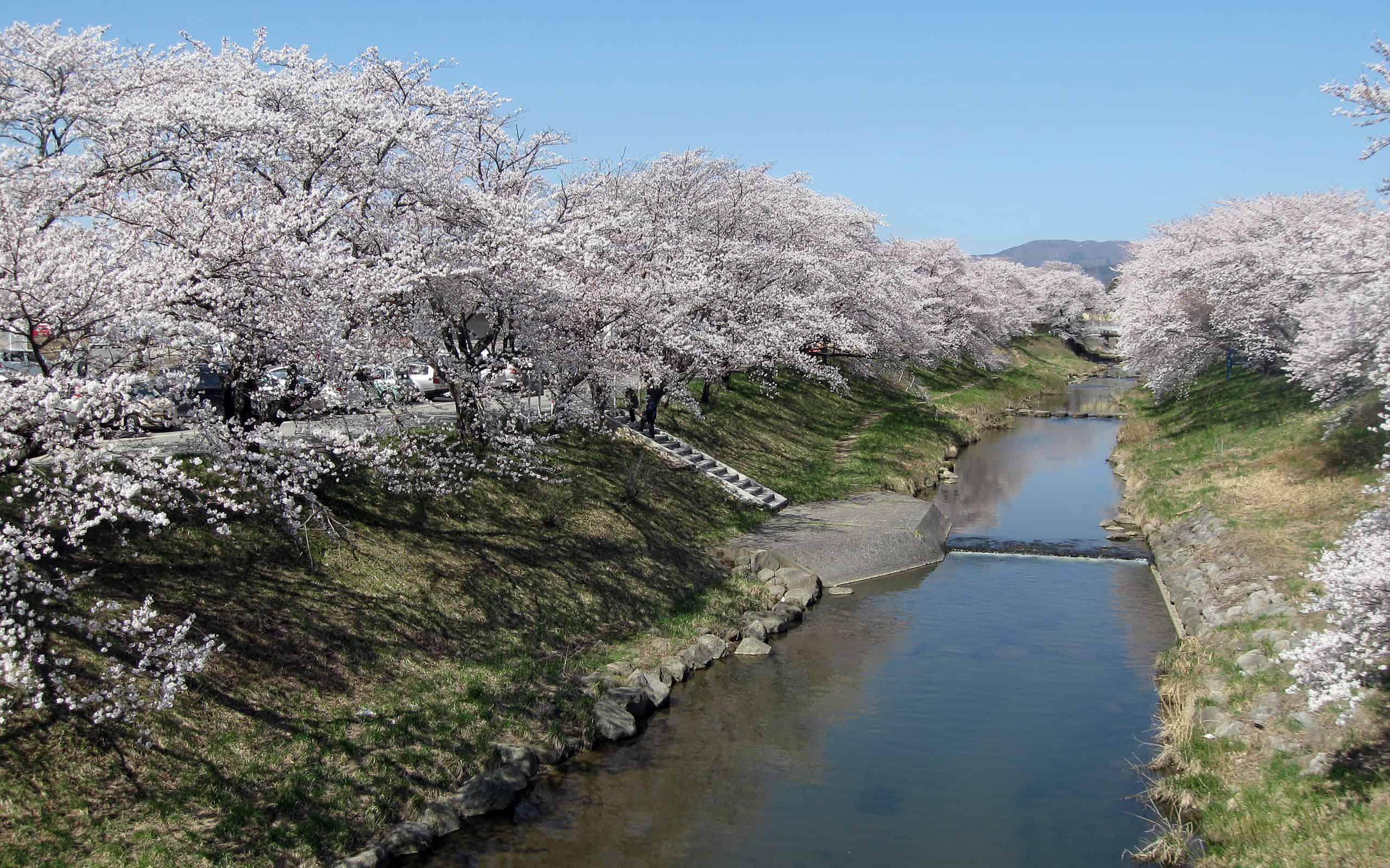 ชม ซากุระ (Sakura) ริมแม่น้ำโทดะ Todagawa Fureai Zakura ผ่าน Live Camera