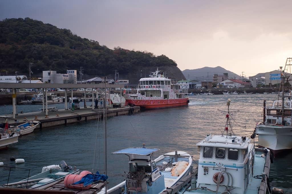 เกาะแมวในญี่ปุ่น : เกาะซานากิจิมะ จังหวัดคางาวะ (Sanagijima, Kagawa)