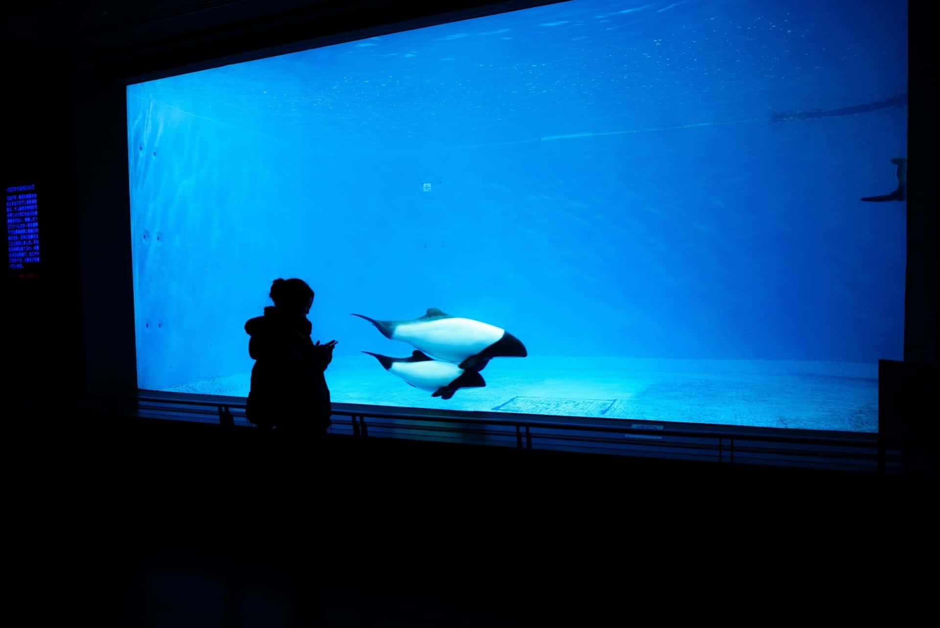 ที่เที่ยว มิเอะ (Mie) : พิพิธภัณฑ์สัตว์น้ำโทบะ (Toba Aquarium)